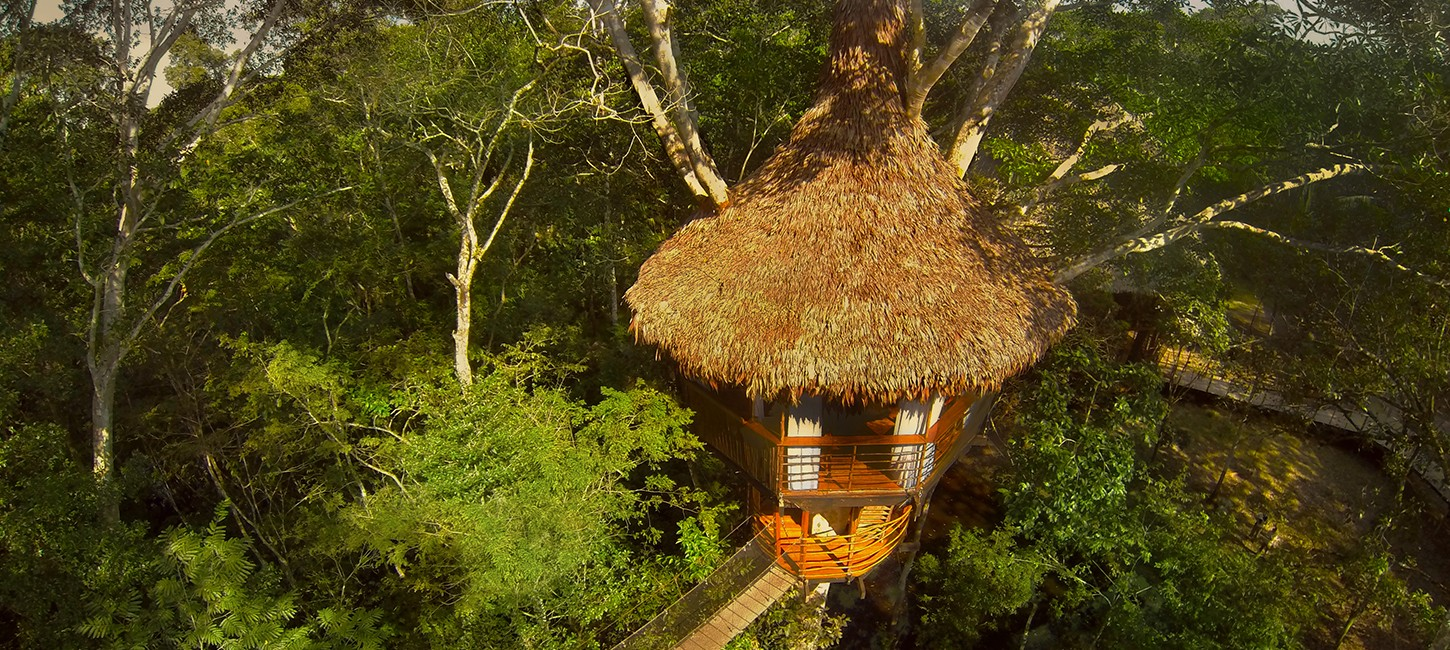 the treehouse lodge