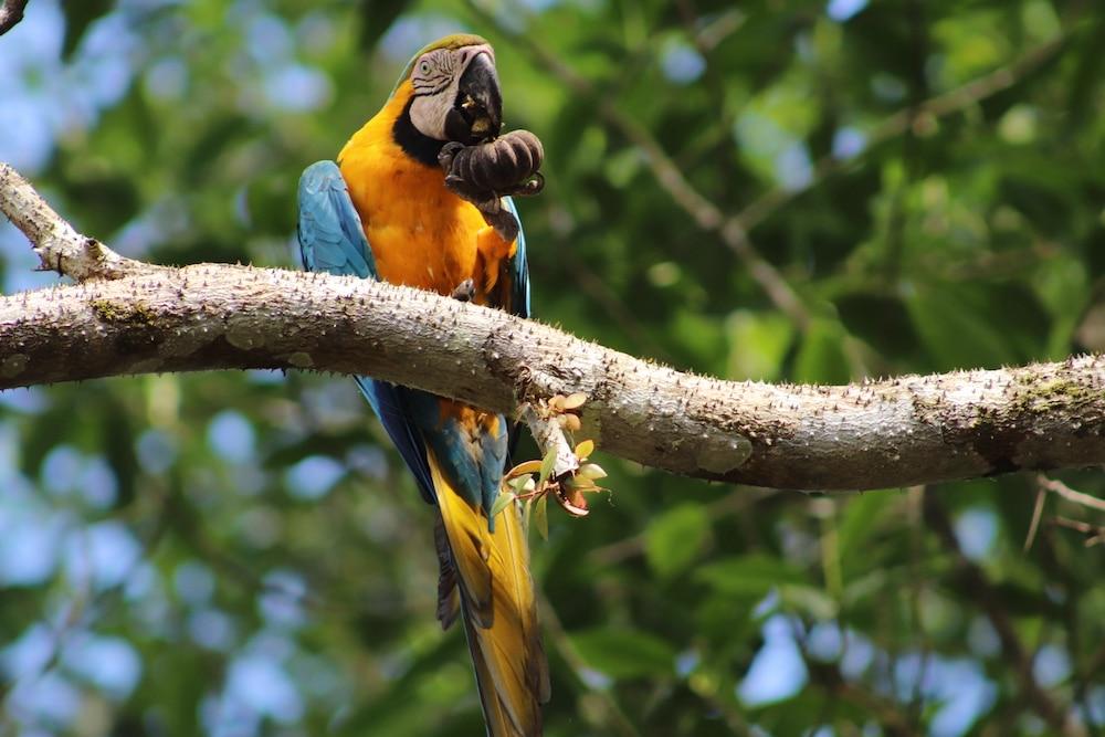 aves selva peru