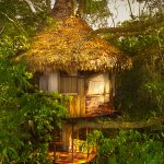 treehouse three
