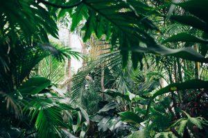 medicine at the amazon rainforest peru