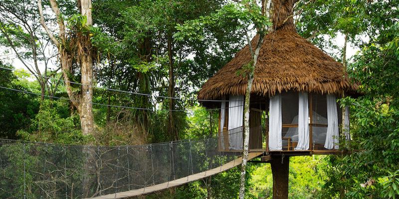 rainforest-treehouse