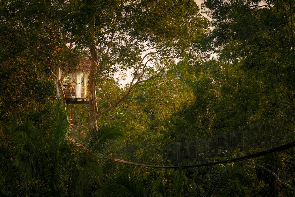 information about the Peruvian Jungle